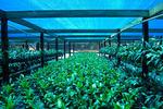 Мрежа за оранжерии засенчваща