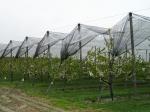 Мрежа против градушки за лози