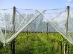 Мрежа за предпазване от градушка на лозови асми