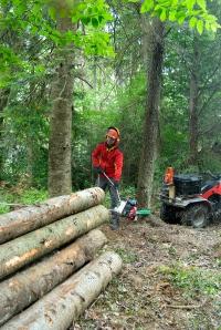 Лебедка за дърводобив