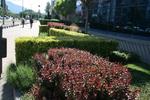 озеленяване и растителност на градини