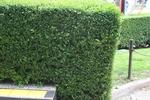 озеленяване чим