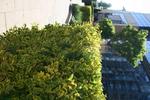 озеленяване двор