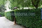 озеленяване и растителност