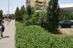 озеленяване на обществени градини