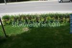 професионално озеленяване на обществени градини