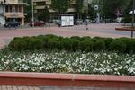 озеленяване на обществени пространства по поръчка